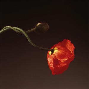 Petit Hommage dans Private flowers_4